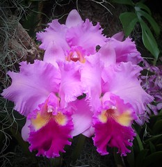 MoBot Orchid 2015-043