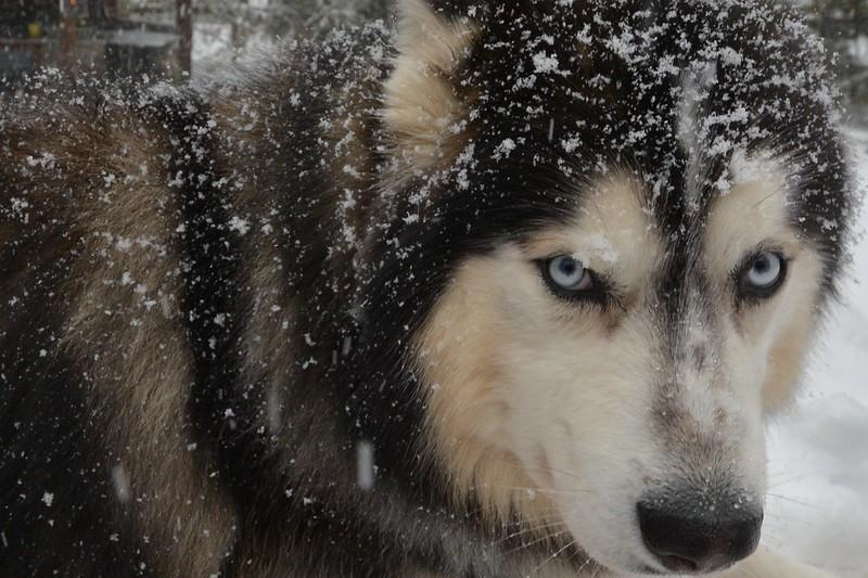Snowy Zarro