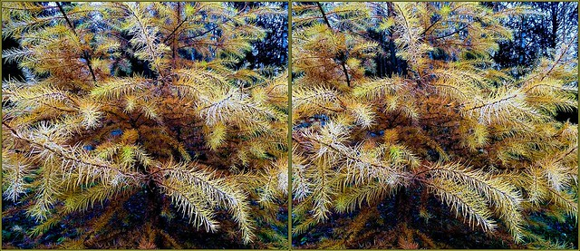 ... larch tree ... 3D cross-view ...