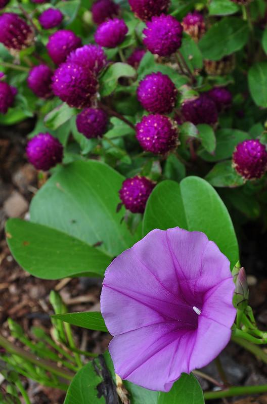 Sensory Garden (5)