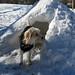 Grounddog by Michael Mitchener