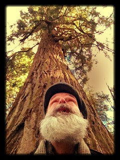 Day 63 - The Mighty Redwood!