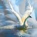 Swan Charge by plsanders97