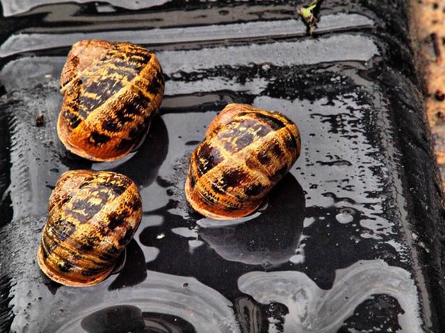 002 three Snails