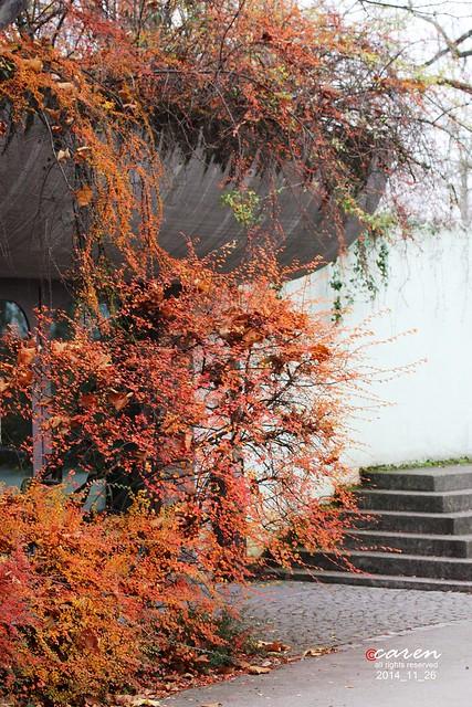Herbst 2014_11_26 076