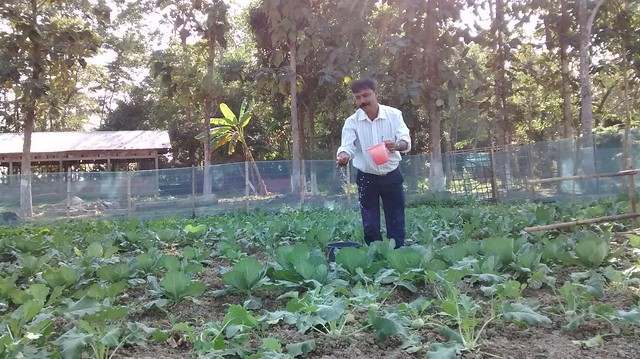 Mujibur Rahman watering the vegetables in the old age home campus on the outskirts of Nalbari