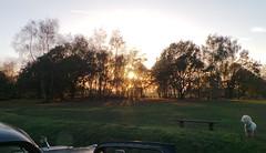 Headley - Surrey - Oct 2014 - Sunsetting Through the Trees