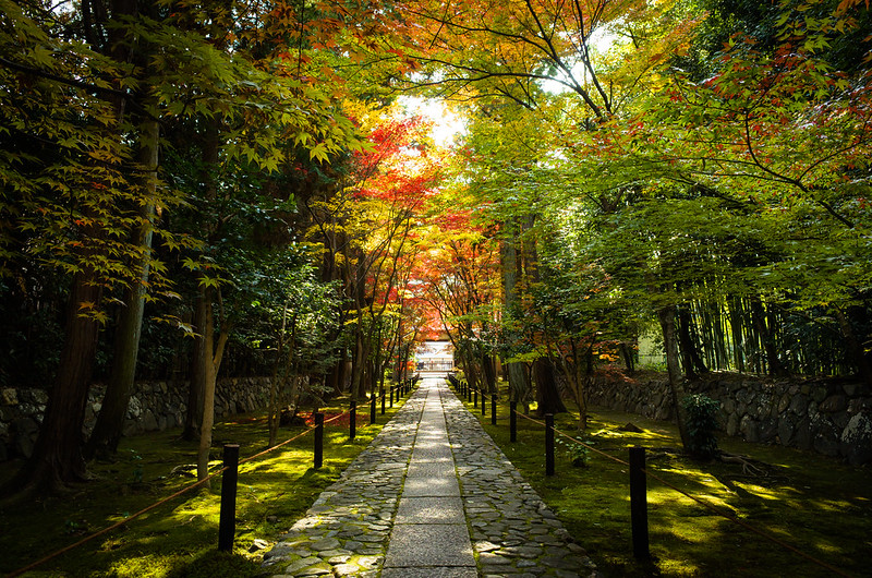 autumn foliage of 2013 #5 (Rokuou-in temple, Kyoto)
