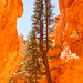 Tree in Bryce Canyon UTAH by olli_mlh