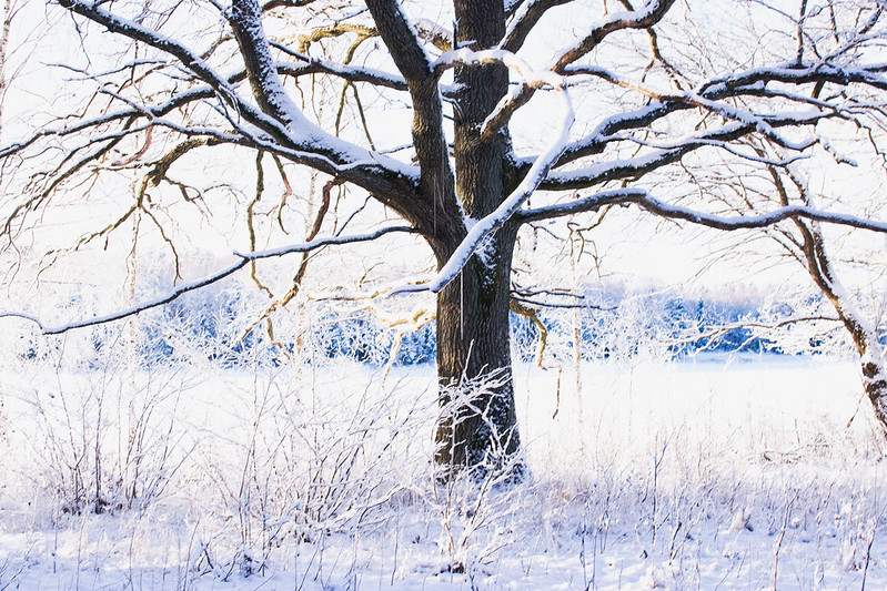 vinterslanten17