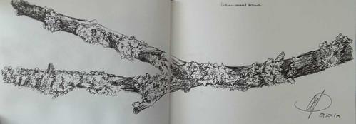 9&10-lichen500