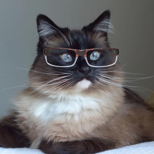 Bean_Glasses_6
