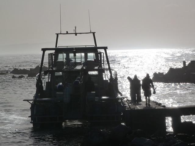 Barco en el que zarpamos para salir a buscar al tiburón blanco en Sudáfrica