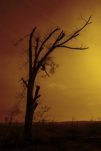 bw tree broken photoshop mississippi effects nikon tornado topaz lightroom tupelo quadtone 2485mm d700 zannonewordphotochallenge