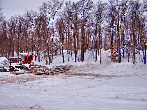snow cold working logging freeze