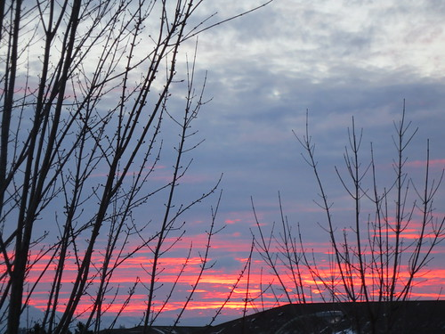 trees sunset sky canada clouds bc okanagan branches columbia british kelowna