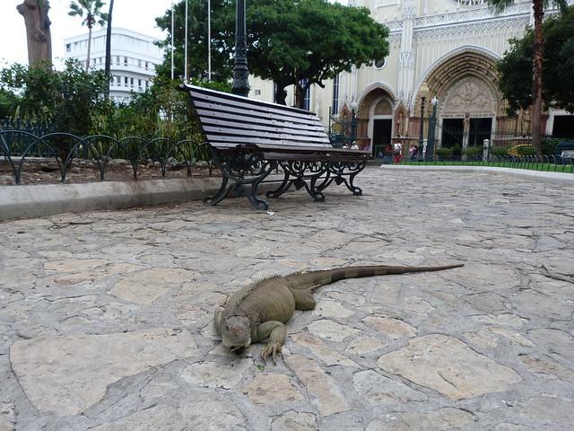 Imagen del Parque de las iguanas de Guayaquil (Ecuador)