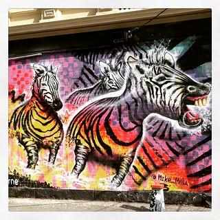 Collingwood zebras 365/63 #2015PAD #campbellstreet