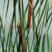 Riverbend Ponds_MIN 325_23