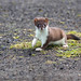 Little Stoat by kingfisher888