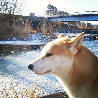 川もすっかり冬。