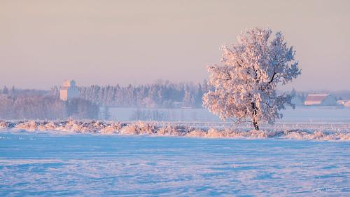 winter canada sunrise landscape hoarfrost alberta prairie namao