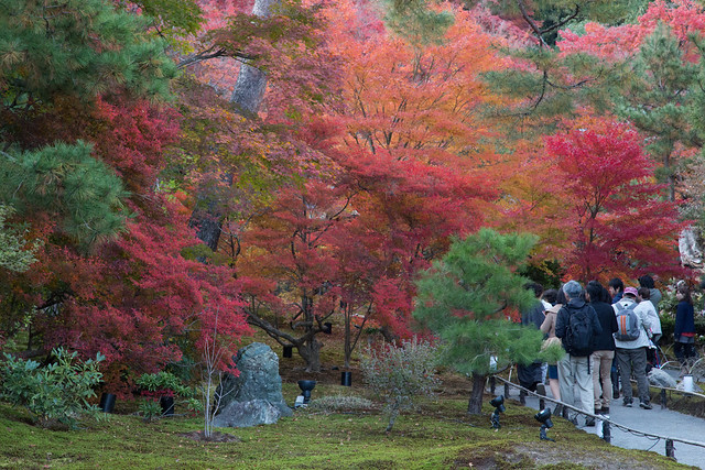 Arashiyama kyoto Autumn leaves 宝厳院と嵐山の紅葉