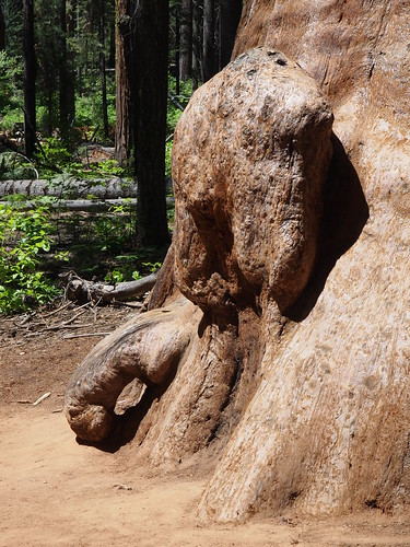 An elephant in the Giant Sequoias