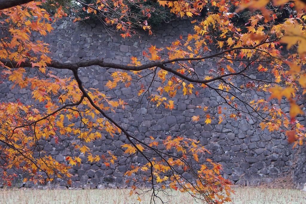 皇居東御苑 Tokyo Imperial Palace Garden