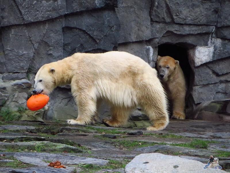 X Tierpark Berlin Eisbären 20.12.2014 112