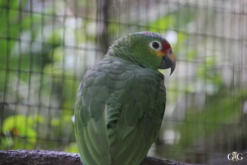 Zoo Karibikinsel Belize 19.11.2014 64