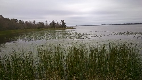 natural florida marshland centralflorida landolakes lakeharris