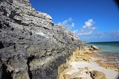 Calcarenitic eolianite (Hanna Bay Member, Rice Bay Formation, Holocene; Graham's Harbour, San Salvador Island, Bahamas) 13