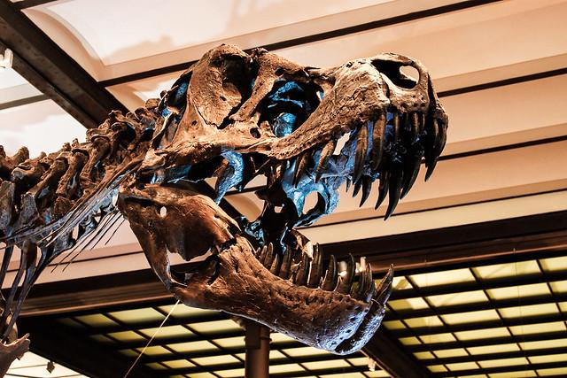 esqueleto del Tiranosaurio Rex