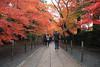 Photo:粟生光明寺-komyo-ji By 歲月之歌