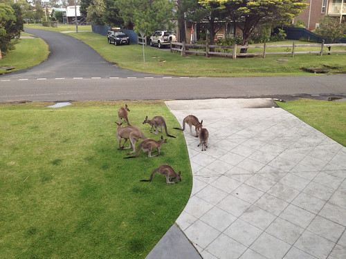 Roos at our home