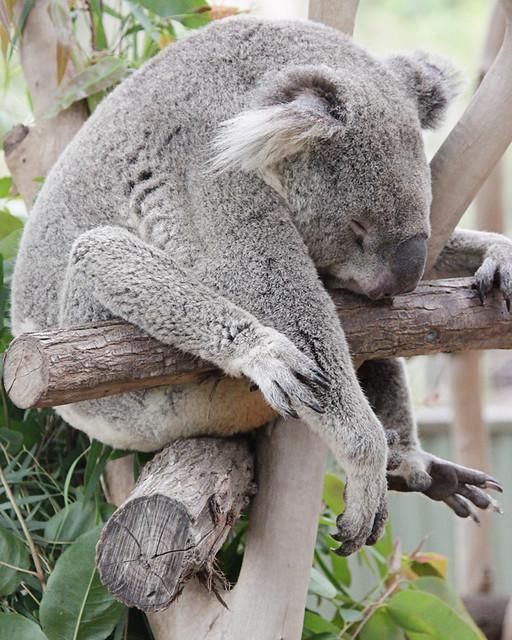 AustraliaDay2015-2