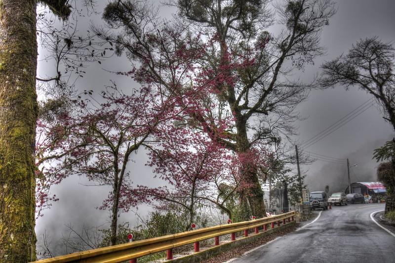 中橫公路的山櫻花 HDR 合成