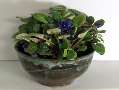 African Violets in a Hand-thrown Ceramic Bowl with SIP plumbing