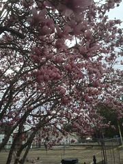 1129 Early Spring