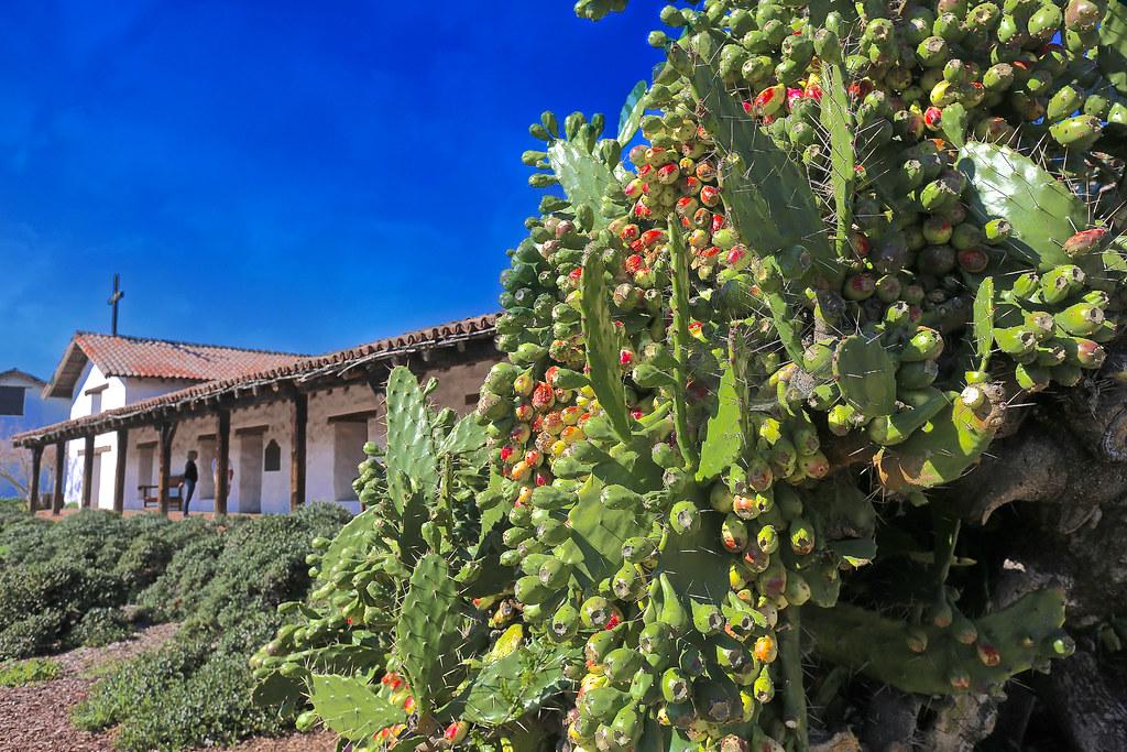 2569 Sonoma, California: Dreamy vineyards...