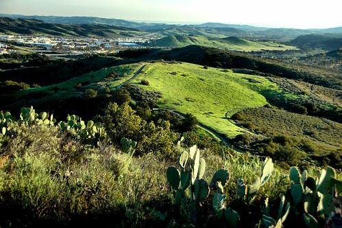 view meadow sage vista scrub chaparral tral oneillregionalpark trabucocanyoncaliforniaphotodigitalwinterafternoonhillscoastal