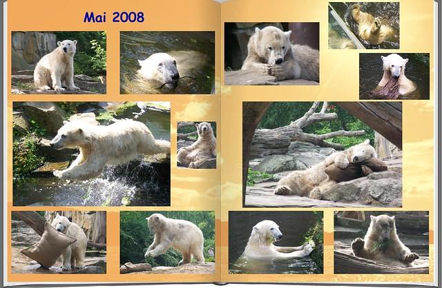2008_05 Eisbär Knut
