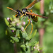 Wasp by DFiveRed