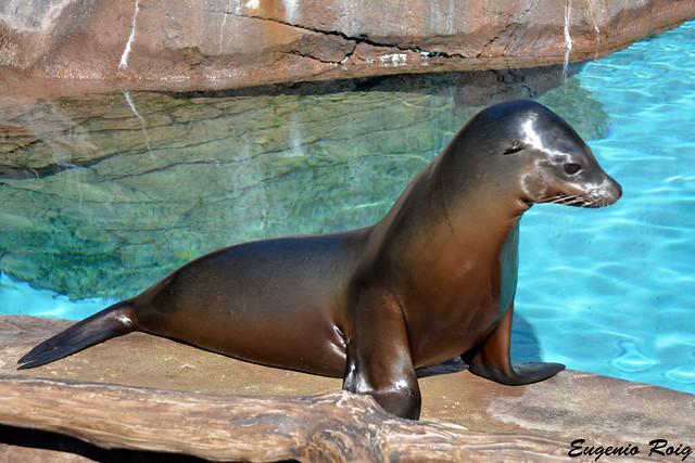 Indianapolis Zoo, Indiana