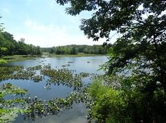 Morgan Days Park - Smith Pond (18)