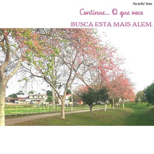 #BomDia #FlordoDia #bonjour Amuuu receber flores! 🌸💜 Essas o amigo @victoraugustofarias encontrou no Parque Tucumã, aqui em Rio Branco. Lindas, né? 🌸💜 Olhando para elas e refletindo... O caminho é lo