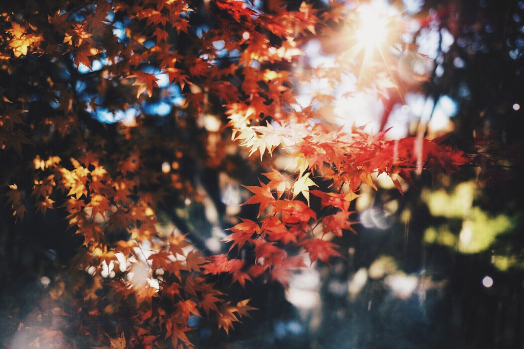 秋 Nature Autumn Beauty In Nature No People EyeEm Nature Lover Eyem Best Shots FUJIFILM X-T1 X-T1