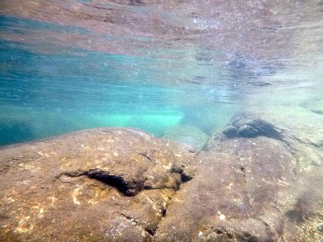 Underwater in a tropical river