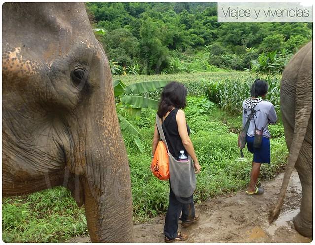 elefantes3
